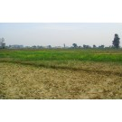 8 Bigha Agriculture Land For Sale on Bithoor Road Kanpur At Rs 9 Crore