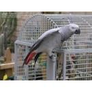 exortic parrots for sale