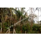 Well demanded 10cent house plot for sale in Nadavayal