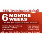 Become SEO Experts in 6 Weeks