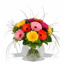 Mixed Gerbera in a glass Vase
