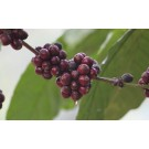 invest on our coffee estate plantation and get higher revenue