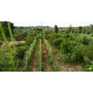 FULLY DEVELOPED FARM LAND PLOTS 40 MIN FROM ELECTRONICS CITY