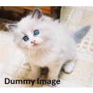 Cute kittens are available for sale