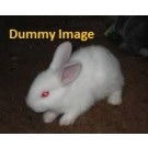 Cute rabbit for sale in Allahabad