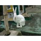 White colour cute Rabbit for sale