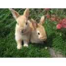 Want To Sale My Pet Rabbits Best Price