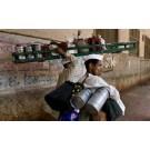sri visokul like a home in Ahmedabad