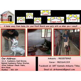 DOG KENNEL IN MUMBAI - DRT KENNELS