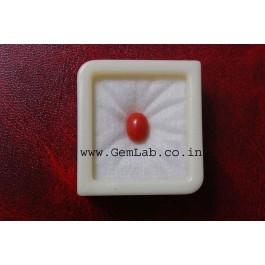 Buy GemLab Certified Red Coral- Rajasthan Jaipur-Ajmer- Kota