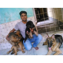 pets dogs pups available at 9334915667 with home delivery facility
