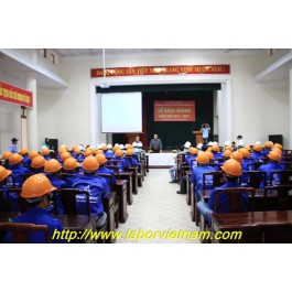 Are you looking for Vietnamese Labors