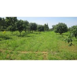 10 acres agricultural land for sale at duddipalem near sabbawaram